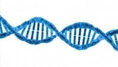 Genetics vs. Environment