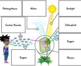 Medium mind maps